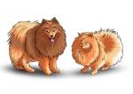 chiens couleur